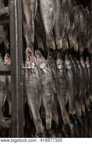 Smoked fish production concept: smoked fish in smokehouse box.