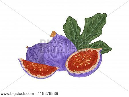 Fresh Whole Figs, Their Cut Pieces With Juicy Flesh And Leaf. Composition With Exotic Purple Fruits