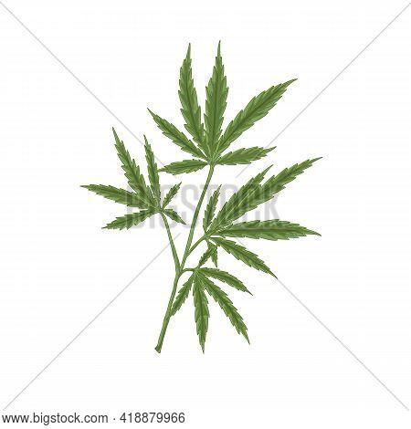 Hemp Plant With Leaf. Hand-drawn Marijuana Or Cannabis Stem With Leaves. Botanical Art In Retro Styl