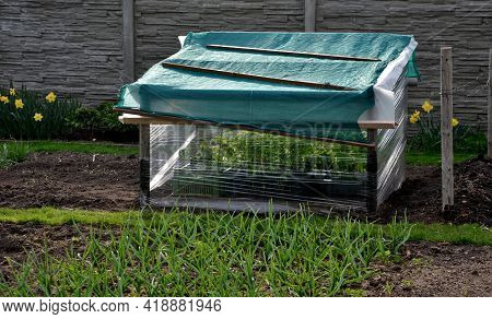 Foil Cover For Growing Vegetables Simply Made Of Shrink Wrap For Food Packaging Used To Grow Vegetab