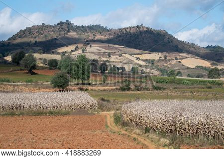 A Beautiful And Scenic Hillside Landscape Of A Farm Land With Corn, Chili And Rice Between Kalaw And