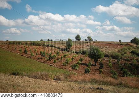 Beautiful Agricultural Rice And Chili Fields With Trees Under A Blue Sky With Clouds During Summer B