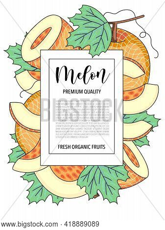Vector Background With Melon, Whole And Pieces - Card Design With Fruits