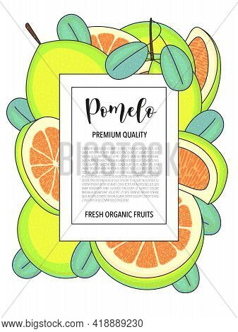 Vector Illustration Background With Pomelo, Whole And Pieces.