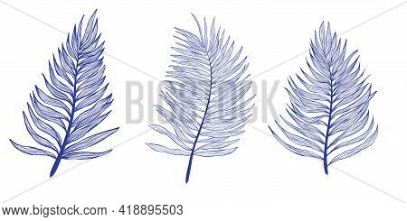 Hand Drawn Collection Palm Tree Leaves In Linear Style. Minimalistic Trendy Tropical Palm Leaf Set.