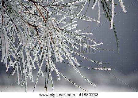 Plants frozen