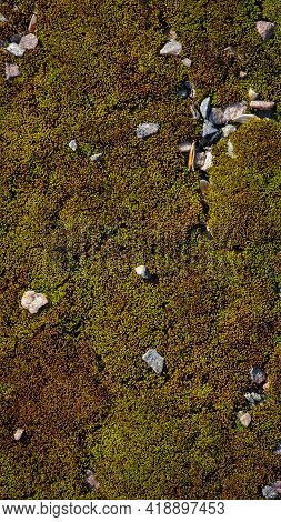 Moss. Bright Yellow-green Moss, In The Forest. Natural Autumn Background. Stones Lie On Moss, In The
