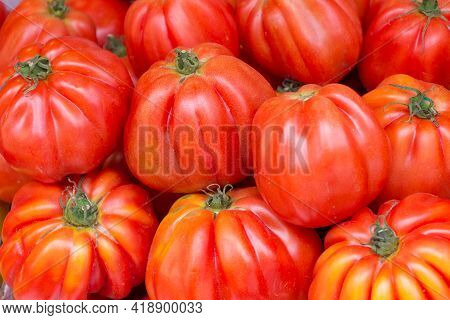 Bunch Of Ripe Fresh Red Bio Beef Tomatoes From Above. Group Of Organic Nature Solanum Tomato Food An