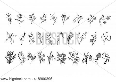 A Set Of Hand-drawn Flowers, Plants And Herbs. The Collection Includes:clover, Chamomile, Lily, Wild