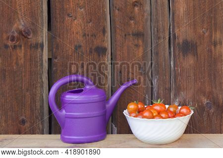 Harvest Red Tomatoes In White Bowl Next Purple Watering Can. Gardening Fresh And Juicy Vegetables Fr