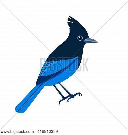 Stellers Jay, Cyanocitta Stelleri Is A Bird Native To Western North America. Blue Bird Cartoon Flat
