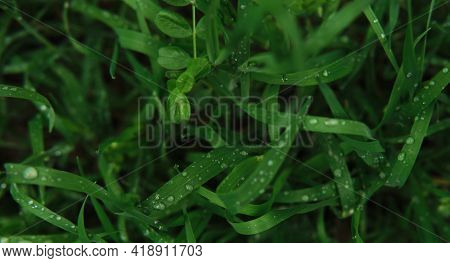 Minimalist Screensaver With Elements Of Nature And The Environment. Bright Green Grass With Dew Drop