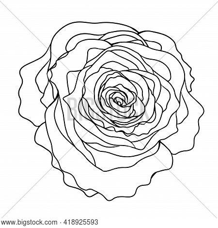Line Rose Flower Isolated On The White Background