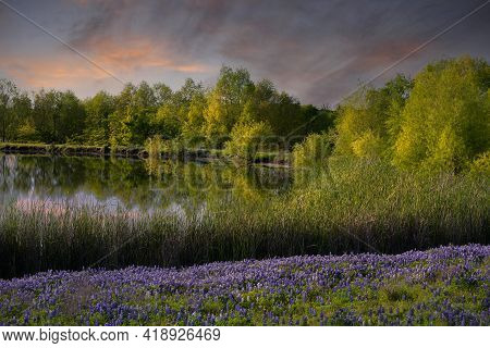Serene Texas Bluebonnet Field With Pond Reflections