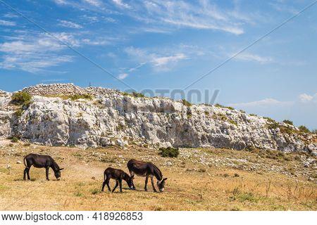 Donkey near Monte Sant Angelo, Apulia region, Italy
