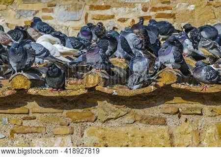Many Pigeons Over Roof At Monastiraki Square, Athens City, Greece
