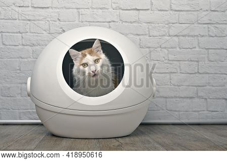 Cute Tabby Cat Sitting In A Self-cleaning Litter Box And Looking Funny At Camera.