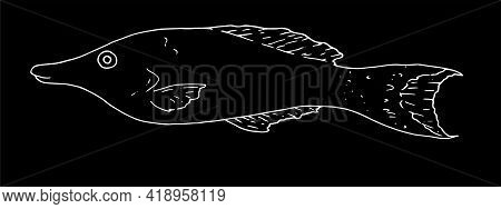 Sketch Sea Fish In Sketch Style On Deep Background. Abstract Background. Vintage Print.vector Of Sea