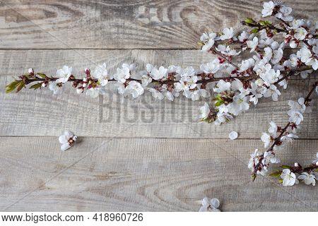 Spring Flower Landscape. Spring Blooming Spring Flowers.  Copyspace