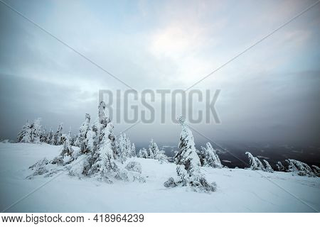 Moody Winter Landscape Of Spruce Forest Cowered With Deep Snow In White Cold Frozen Mountains.