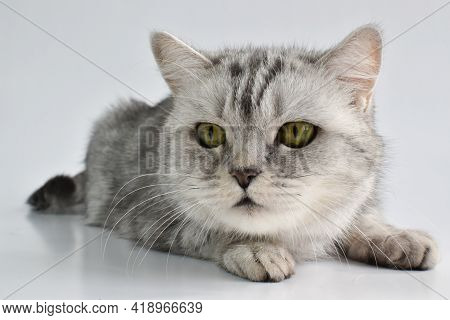 A Tabby Cat Is Lying On A White One. Domestic Animals.