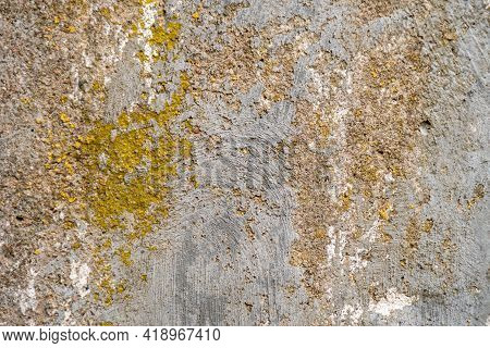 Concrete Wall Covered With Moss, Background For Designer. Rough Stone Texture With Moss.