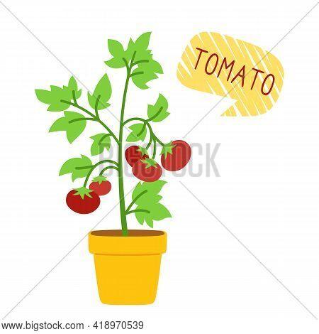 Tomato Bush In Pot For Houseplants Flat Cartoon Card. Organic Tomato Plants With Speech Bubble. Pott