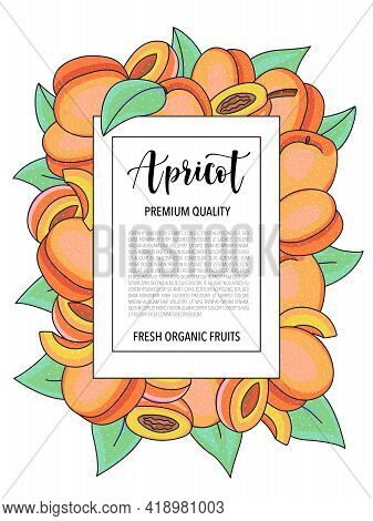 Vector Background With Apricot, Whole And Pieces - Card Design With Fruits