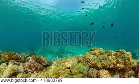 Reef Coral Tropical Garden. Tropical Underwater Sea Fish. Colourful Tropical Coral Reef. Philippines