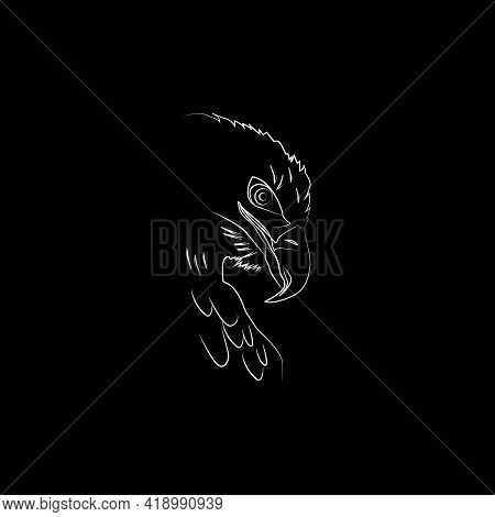 Vector Illustration. Falcon Image. Vector Bird. Predator, Hunter.