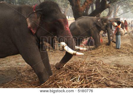 Elephants For Sale