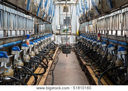 Equipment with milking machines on dairy farm