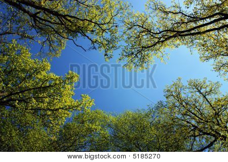 Spring Forest, Trees In The Sun Light