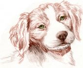 Sketch of a Britney Spaniel Puppy looking cutely towards the viewer. poster