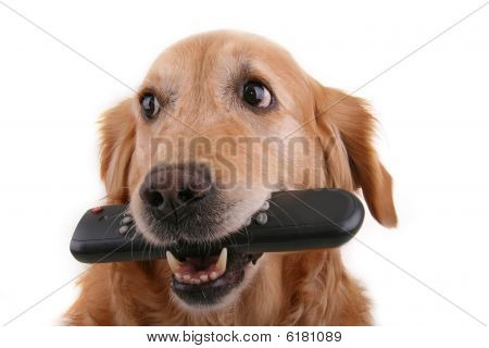 dog witth remote control