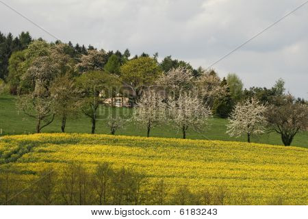 Rape field in spring, Lower Saxony, Germany