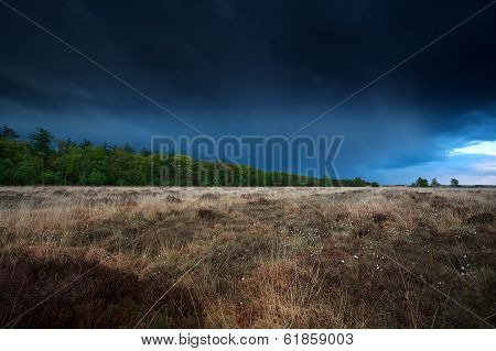 Stormy Sky Over Marsh With Cottongrass
