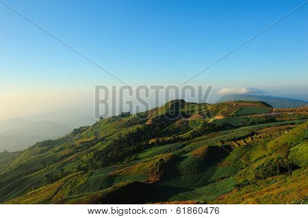 Landscape Of Cabbage Field