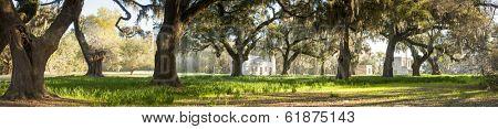 ruins of plantation house and live oak trees, south carolina, wide panorama