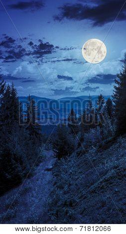 Night Walks In Mountain Forest Under Moon Light