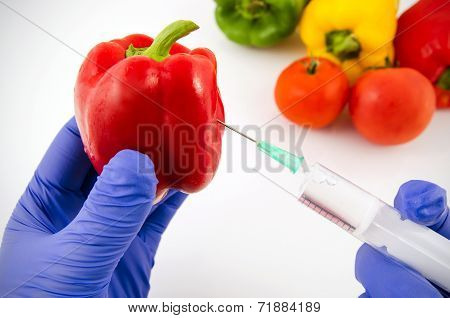 Man with gloves working with pepper in genetic engineering laboratory. GMO food concept. poster