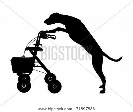 Dog Pushes Rollator