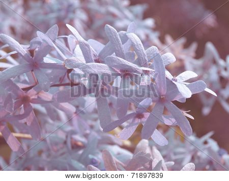 Purple Wreath Or Sanpaper Vine Flower Selective Focus In Vintage Style