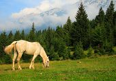 horse eating in the mountains poster