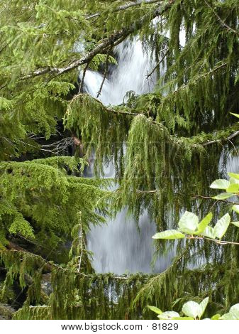 Waterfall Through The Branches