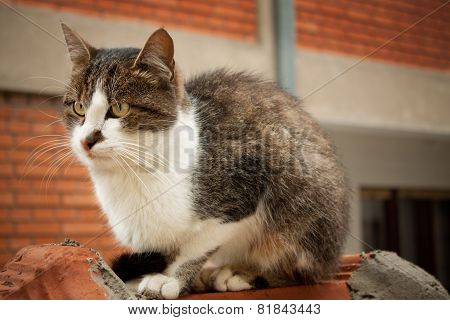 Cat On A Shed Roof
