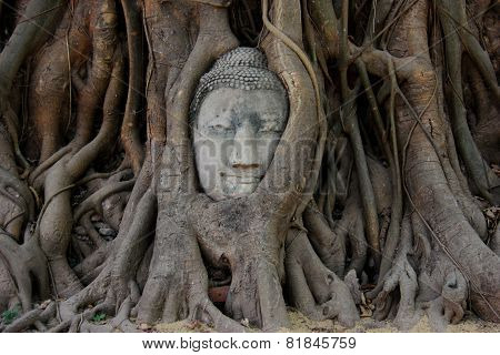 Ancient Buddha's Head In A Big Tree