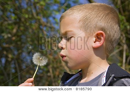 Young Six Year Old Boy Blowing The Seeds From A Dandelion Clock In The Spring Sunshine