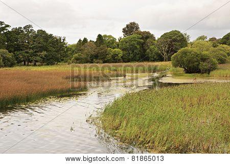 Lough Leane Lower Lake with deer.