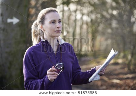 Woman Orienteering In Woodlands With Map And Compass